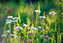 травы от псориаза