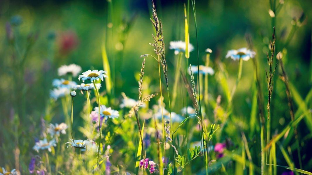 Травы от псориаза принимать внутренно